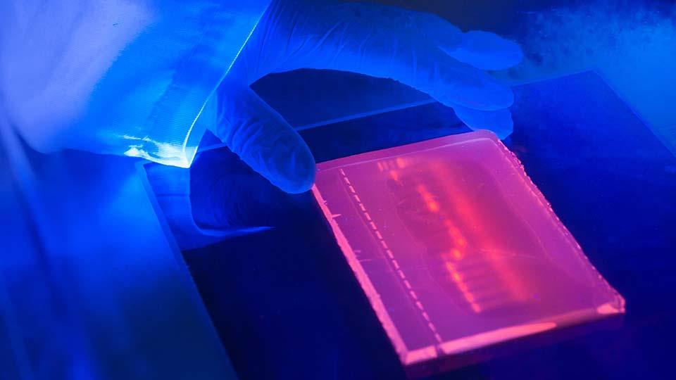 Gel Documentation Gel Doc Fluorescence